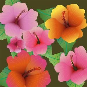 Hibiscus-flowers
